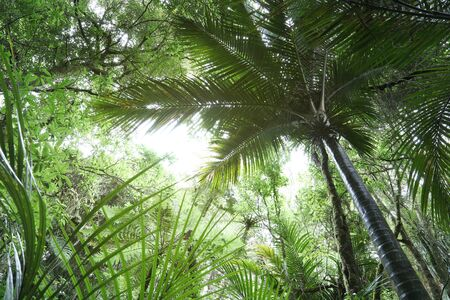 Tree canopy in tropical jungle