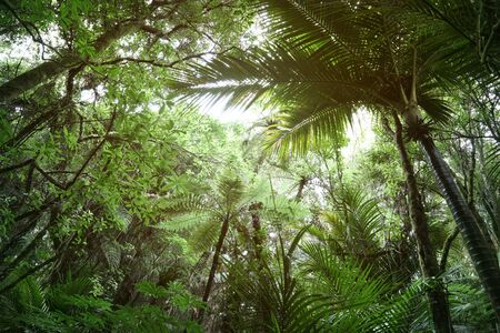 Tree canopy in tropical jungle Banco de Imagens