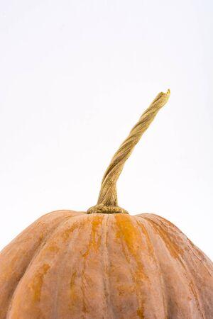pumpkin patch: Pumpkin on white background