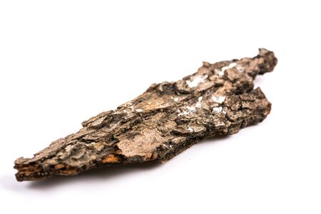 cortex: Texture of pine stock cortex
