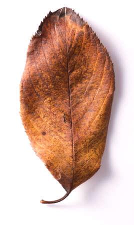 Closeup of leaf Stock Photo