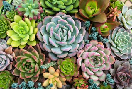 다육 식물의 직사각형 배열; 화분에 선인장 succulents 스톡 콘텐츠