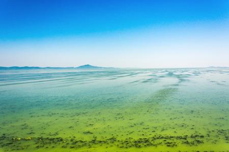 더운 여름의 결과로 Cyanobacterias에 의해 덮인 큰 우크라이나 강 Dnepr