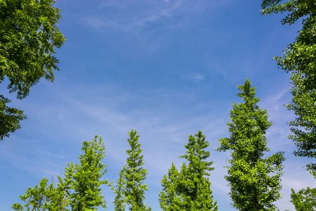 Green leaves under the clear blue sky