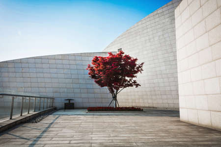 Tree with building  Wall at back Editorial