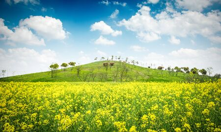 Bright sunset over rapeseed field. Stock Photo