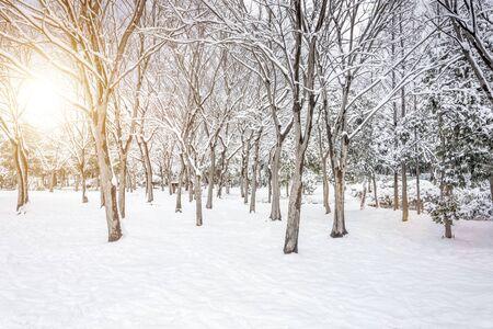 Russian winter at park Reklamní fotografie