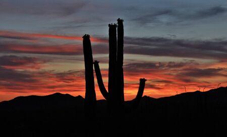 arizona scenery: Desert Sunset