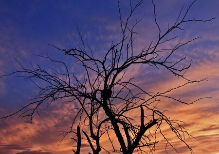 arizona scenery: Sunset and Tree Silhouette