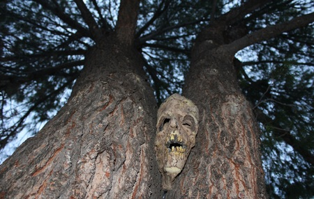 paranormal: Hallow the Demon Face that Lives in the Tree