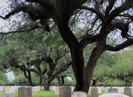 paranormal: Creepy and Ominous Graveyard