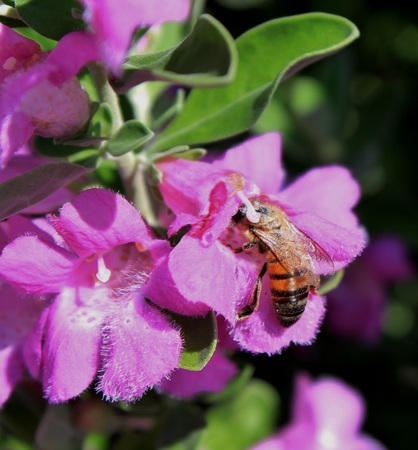 Busy Bees Hard at Work Collecting Pollen Banco de Imagens