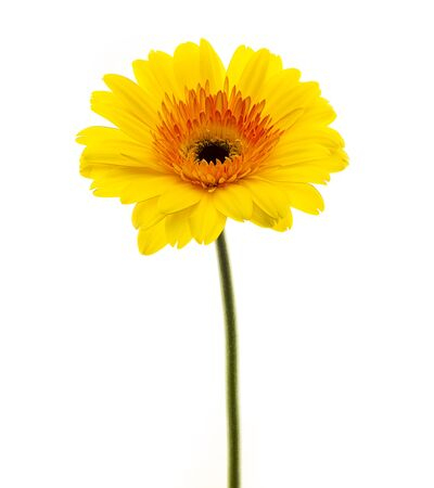 no movement: yellow flower isolated on white background Stock Photo