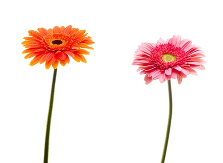 no movement: two flowers isolated on white background Stock Photo