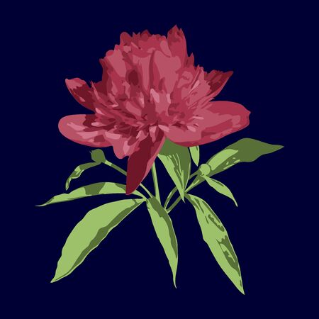 Isolated pink vector peony with green leaves