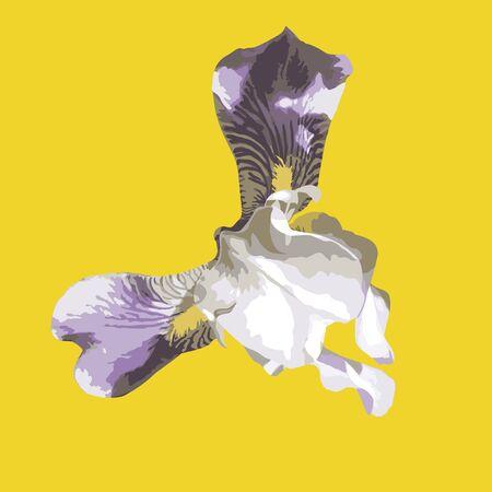 Big realistic isolated light violet iris flower