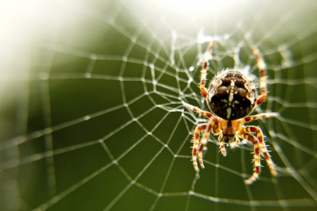 hairy legs: Macro Close Up of Garden Spider