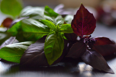 Red and green basil