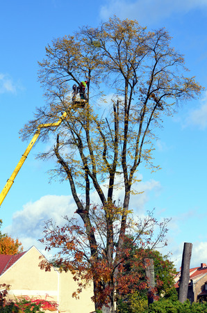 Arborist on a lifting platform at work Stock Photo