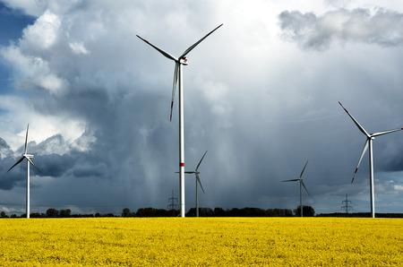 Wind turbines of a wind farm on a rape field on the island of Rügen