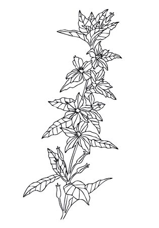 wild flower. Hand drawn herbal flowers isolated on white background. vector illustration. coloring 向量圖像