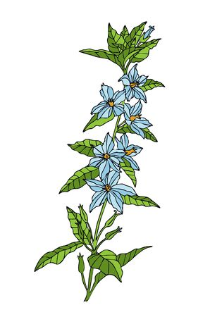 wild flower. Hand drawn herbal flowers isolated on white background. vector illustration. Outline style. Blue flowers, green stem.