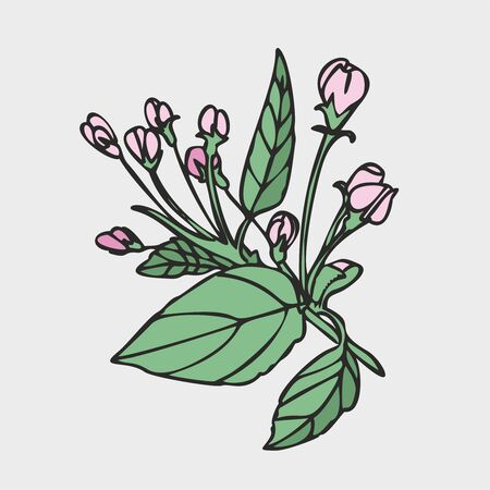 Vector drawing of flowers and leaves of Apple trees, hand-drawn illustration. Blooming Apple tree. Branch with flower buds. The first spring flowers. isolated background. Иллюстрация