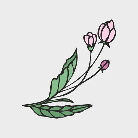 Vector drawing of flowers and leaves of Apple trees, hand-drawn illustration. Blooming Apple tree. Branch with flower buds. The first spring flowers. isolated background. Vectores