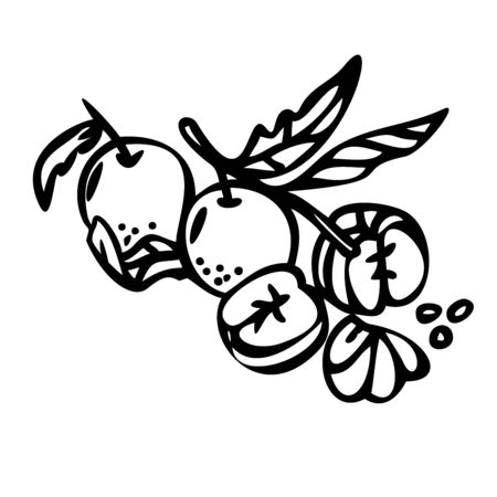 Mandarin citrus branch with leaves. vector illustration. Outline style. Line art. Great for menu, poster or label. Line art.