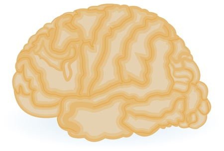 Human brain drawing Stock Vector - 9931043