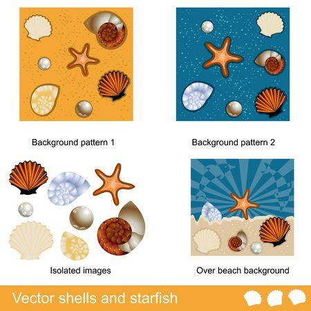 Different shells and starfish collection  Vector