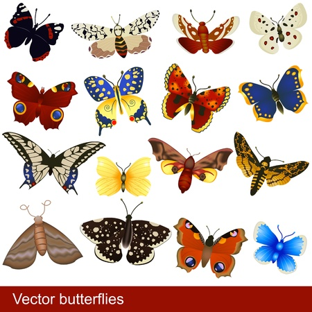Great collection of different butterflies, grouped separately and isolated over white background.