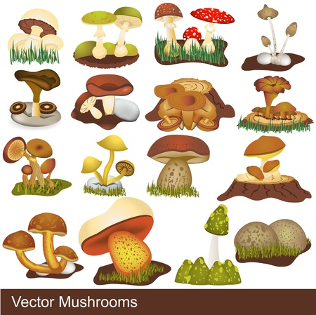 Great collection of different mushrooms, grouped separately and isolated over white background. Vector Illustration