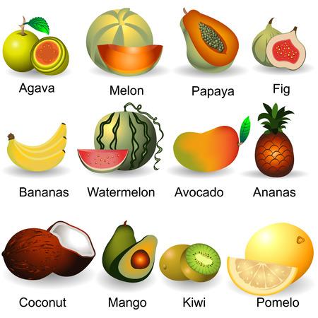 papaya: Collection of fruits, plastic design, part 2