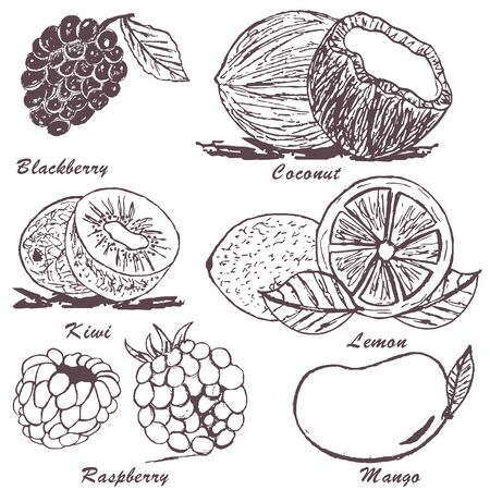 coconut fruit: Collection of fruit sketches - part 3