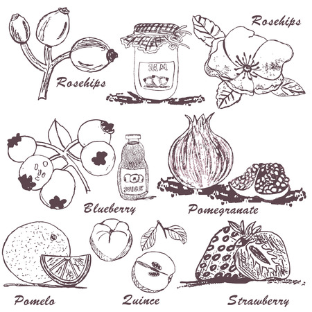 rose hips: Collection of fruit sketches - part 4 Illustration