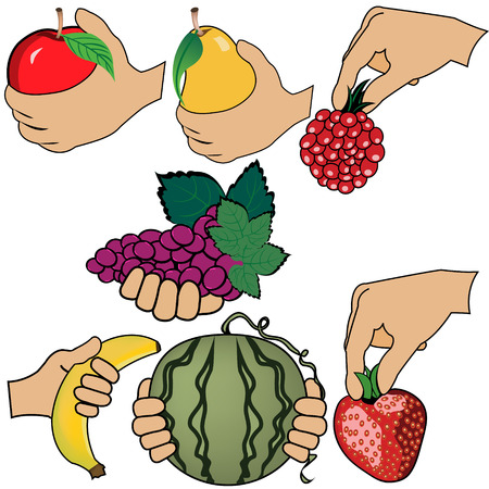 hand is holding fruit Vector