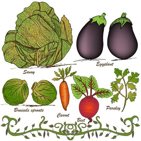 Vegetal dibujado a mano conjunto 2 Foto de archivo - 26570791