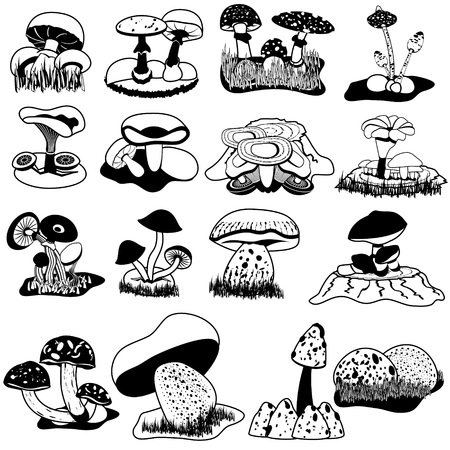 shiitake: Black vector collection of different mushrooms
