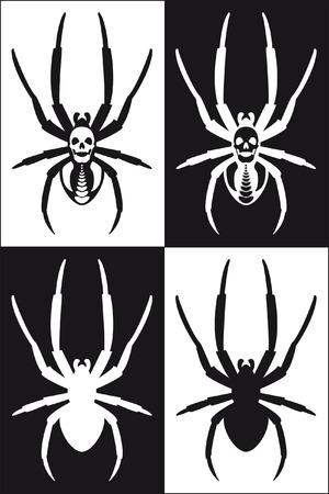 araña en blanco y negro con la cabeza death's -  Foto de archivo - 3392192