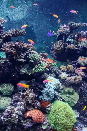 サンゴと熱帯魚の素晴れらしい、美しい水中世界
