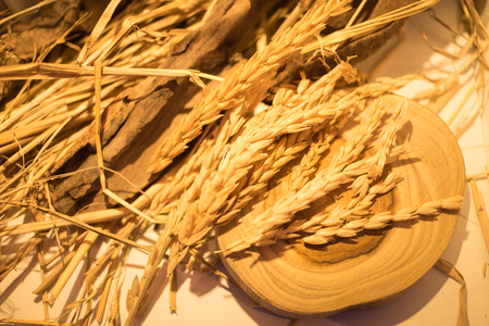 Top view of Golden paddy rice on the wood plate 写真素材