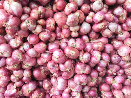 Red Onions for use as background image or as texture