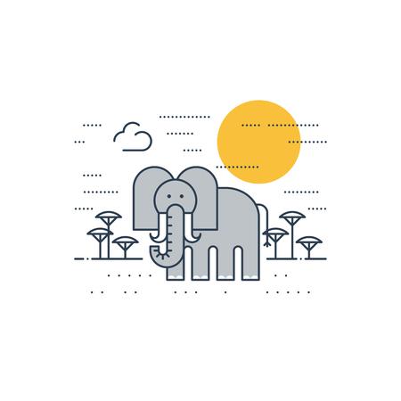 animales safari: fauna africana. Un elefante.