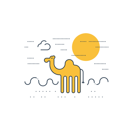 one humped: African wildlife. A Camel.