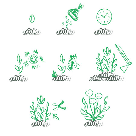 sequence: Hand drawn sequence of growing a plant