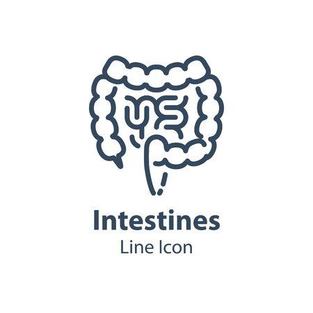 Human internal organ, intestines and colon, digestive system part, health care and treatment, vector line icon, linear design illustration Ilustração