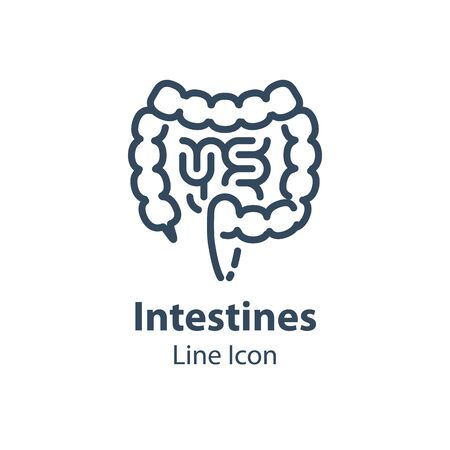 Human internal organ, intestines and colon, digestive system part, health care and treatment, vector line icon, linear design illustration Illustration