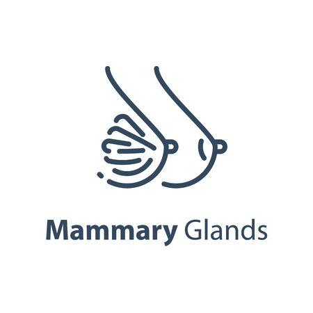 Organe interne humain, glandes mammaires, santé de la femme, soins de santé, vue latérale, icône de ligne vectorielle, illustration de conception linéaire