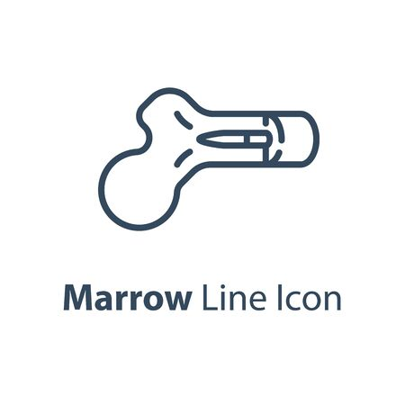 Human internal organ, marrow diagram, vector line icon, linear design illustration